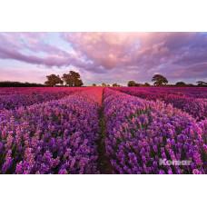 Komar 1-615 Lavendel