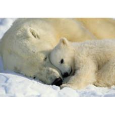 Komar 1-605 Polar Bears  NG